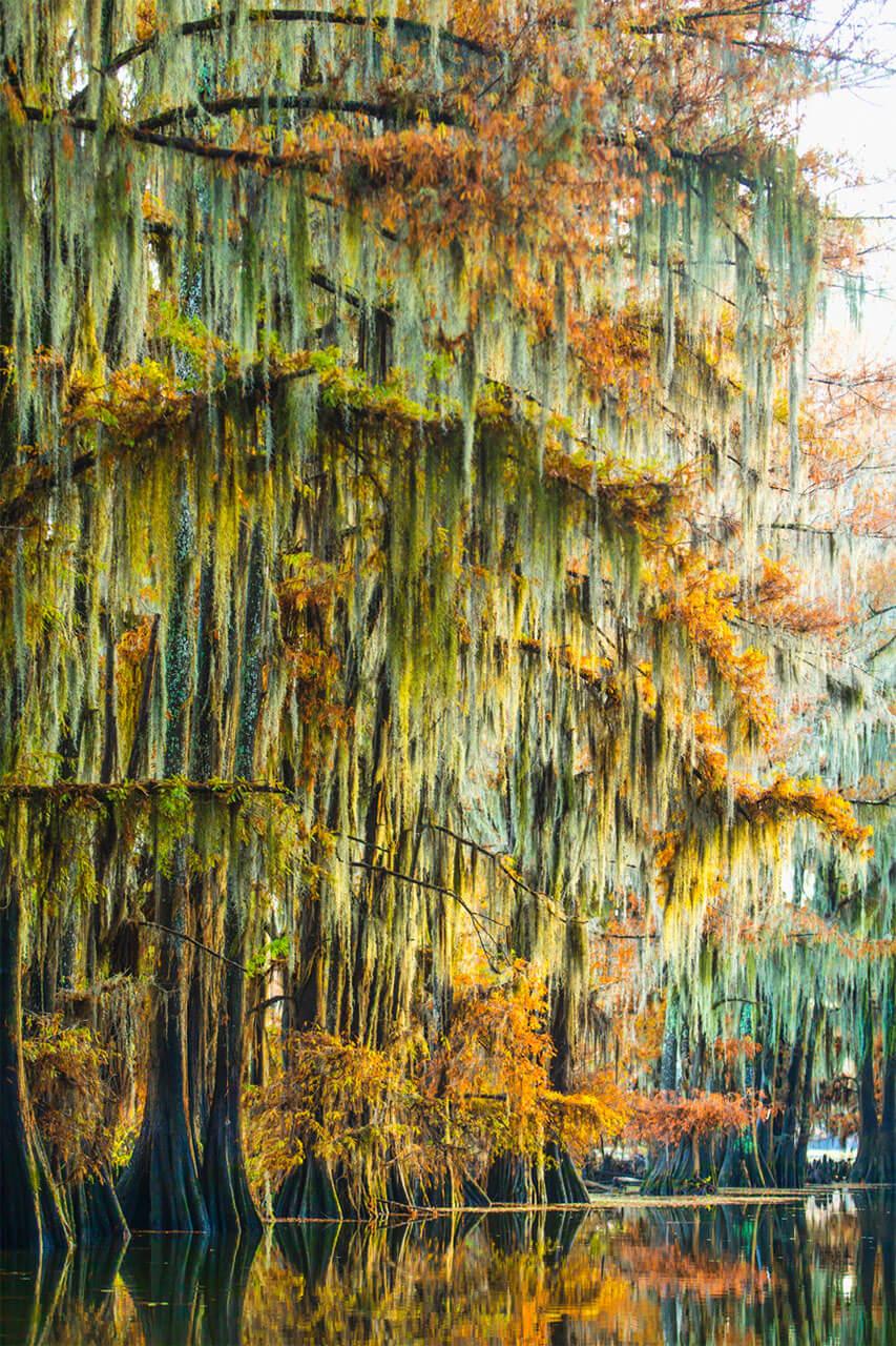 Caddo Lake - Travel Photography