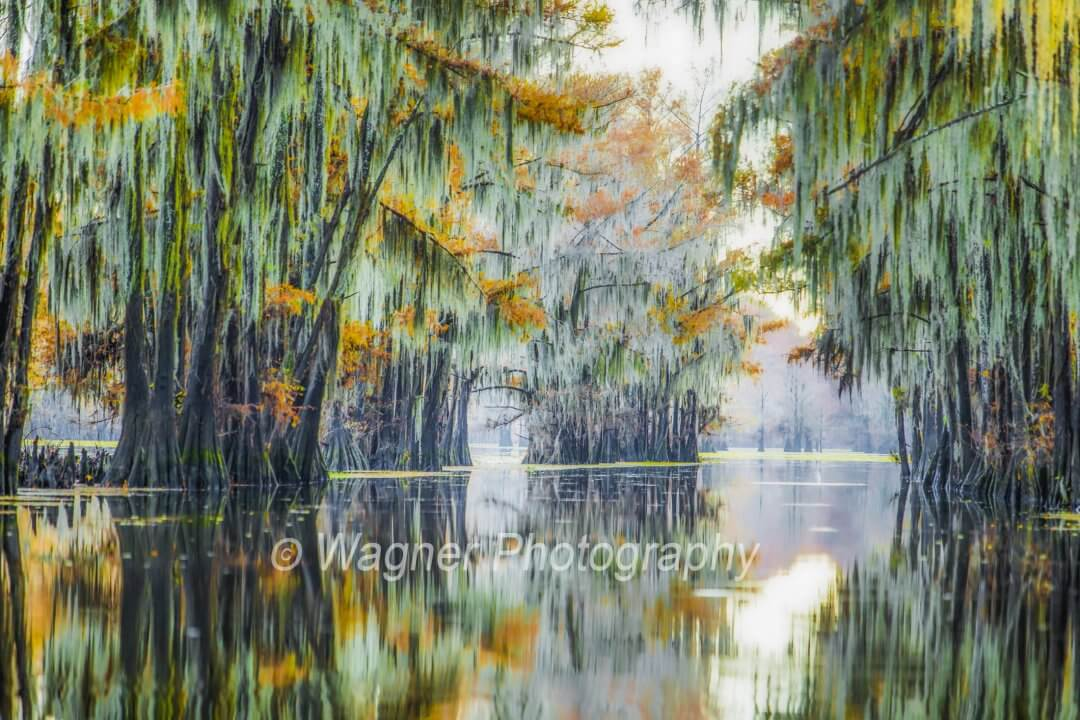 Caddo Lake I